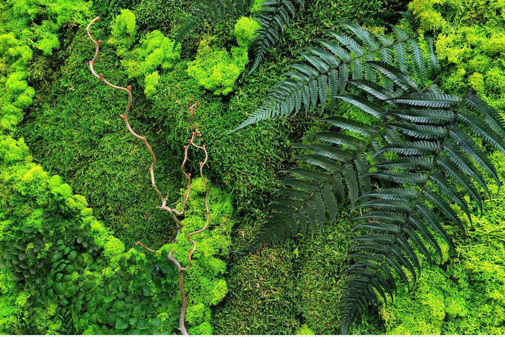 Giardini verticali in moss