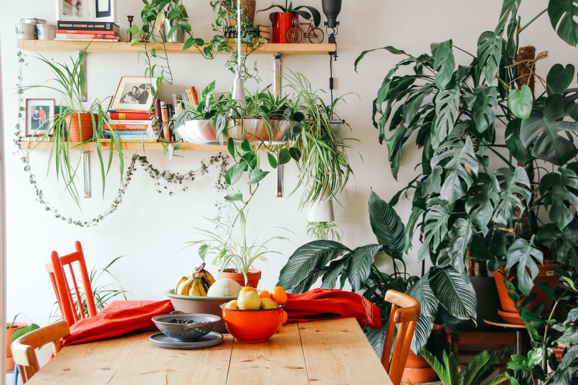 Piante da appartamento che soffrono in inverno: cosa fare?