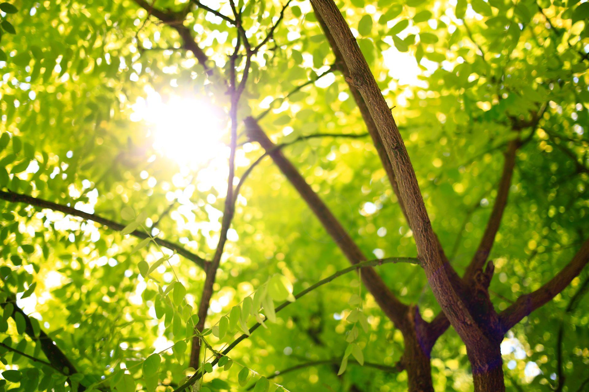 Mossterapia… Il verde che sostiene il buon umore!