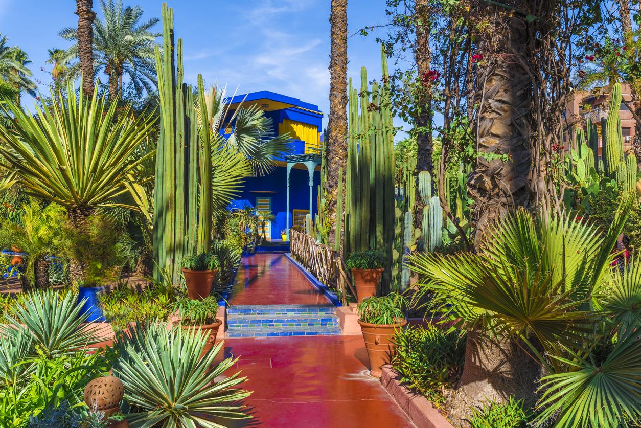 Giardini dal Mondo | Jardin Majorelle